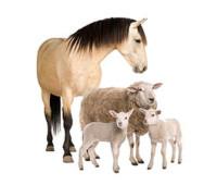 Програма «Універсальна Система Обліку» для обліку тваринництва